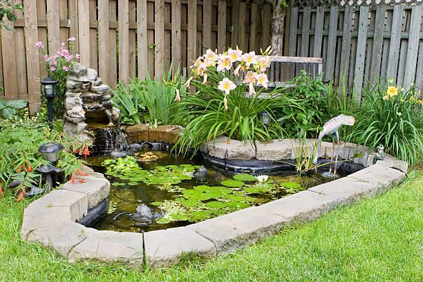 bassin eau verte traitement