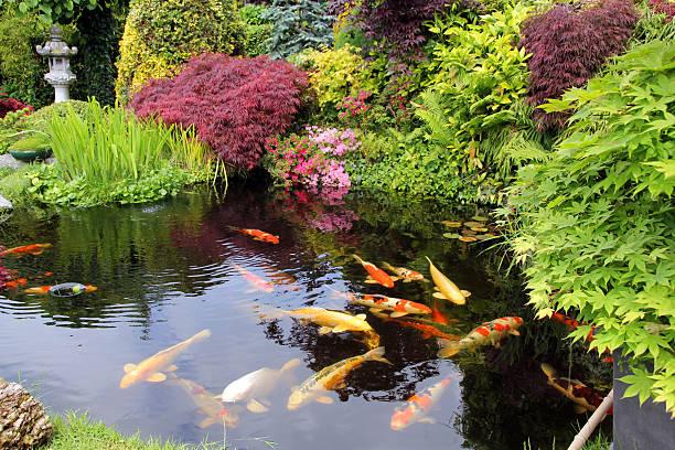 surpopulation poisson bassin